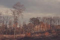 Jesień (pedro4d) Tags: nikon d800 carl zeiss planar 5014 landscape krajobraz polska poland poznań jesień autumn fall herbst landschaft polen