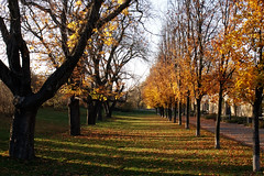Alley of Trees (polarkac) Tags: trees nature prague vysehrad fort fortress autumn