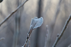 Cold morning (Attolrahc) Tags: canoneos80d sigma100400mmf563dgoshsm sigma sunrise morning cold nature naturephotography