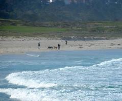 Dogs on the beach (afagen) Tags: california pacificgrove asilomarstatebeach montereypeninsula asilomar beach pacificocean ocean