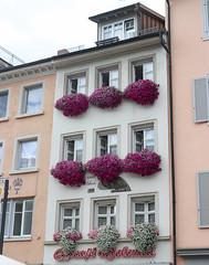 Vacances_0694 (Joanbrebo) Tags: konstanz badenwürttemberg de deutschland streetscenes canoneos80d eosd efs1855mmf3556isstm autofocus flors flores flowers fiori fleur