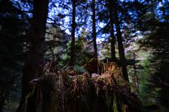 DSC00540 (Sébastien Murail) Tags: wood nature bois montagne vert foret tronc