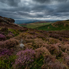 Higger Tor (Keith Rourke) Tags: exibition wasps higgertor