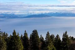 Les Alpes depuis le Jura (Juan de la Puente) Tags: nyon jura viajes suiza francia vaud montaña schweitz suisse svizzera switzerland gingins ch