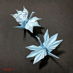 Cristian's Crane (2 variations) (joeygami) Tags: origami design sculpture paper art craft illustration painting crane bird tsuru japan japanese culture wings flying