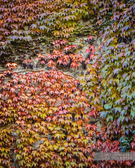 Colors de tardor (Joan Romero) Tags: ngc nikond3300 nikon autumn fall leaves fulles