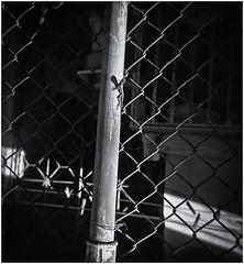 Lomography (Black and White Fine Art) Tags: lomography lomo holga holga120n kodakbw400cnexp2007 chromogenicfilmdevelopedinkodakd76 expiredin2007 bn bw plasticcamera camaraplastica toycamera camaradejuguete lagartija lizard