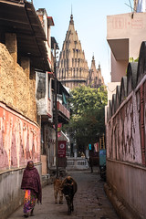 Walk with Holy Cows (shapeshift) Tags: d5600 in alley alleys alleyways architecture asia benaras candidphotography davidpham davidphamsf documentary india nikon pedestrians people shapeshift shapeshiftnet southasia street streetphotography temple travel uttarpradesh varanasi women