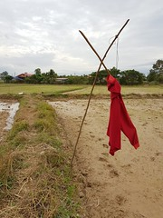 Red scarecrow 1 (SierraSunrise) Tags: thailand phonphisai nongkhai isaan esarn scarecrow red farming agriculture rice ricepaddy paddyrice ricepaddies