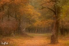 Autumn 2018 at NP Veluwezoom, the Netherlands (Renate van den Boom) Tags: 11november 2018 boom bos europa gelderland herfst jaar landschap maand meervoudigebelichting natuur nederland renatevandenboom seizoenen stijltechniek veluwezoom