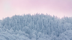 Winter Forest (Bulda9) Tags: landscape forest winter snow dusk sunset trees wood sunrise pink light cold frost