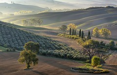 *Val d'Orcia @ dream of a landscape* (Albert Wirtz @ Landscape and Nature Photography) Tags: albertwirtz italy italia italien tuscany toscana toskana tree paesaggi paysage campagna campagne campo paisaje landscape nature natura natur valdorcia morningmood goldenmorning morgenstimmung landscapedream nikon d810 naturepoetry poetry poetica toscanapoetica autumn autunno herbst fall goldenhour goldenestunde oliven olivenhain belvedere olive pienza sanquiricodorcia gegenlicht backlight feld acker field zypresse cypress cipressi rollinghills extraordinarilyimpressive greatphotographers elitegalleryaoi bestcapturesaoi
