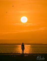 Looking Out (C Sinclair) Tags: anthonygormley anotherplace sculptures sillouette lowtide merseyside crosby crosbybeach