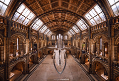 Natural History Museum (Antoni Figueras) Tags: london england uk europe museum natural history whale architecture naturalhistorymuseum indoor panorama sonya7rii laowa12 antonifigueras building