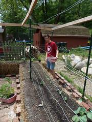 P1080764 (LPompey) Tags: garden strawbale gardening strawbalegarden cabbage tomatoes