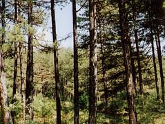 film. (woodland.lullaby) Tags: ilm analog forest trees autumn autumnal beautiful beauty dreamy dark ecoas eunoia ethereal nature nostalgic melancholic minolta leaves soft solitude scanned tree outdoor plant woods woodland