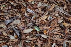 Water Oak (bamboosage) Tags: mc jupiter 9 285 preset m42 russia