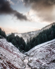 Steaming forest (Zoltan Schadel photography) Tags: woodland locations winter peakdistrict forest people steaming moody landscapes muddy zoltanschadel woods