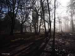 Blue, grey, light, shade (mark.griffin52) Tags: olympusem5 england hertfordshire ashridgeestate countryside sunshine sunlight mist trees forest woodland