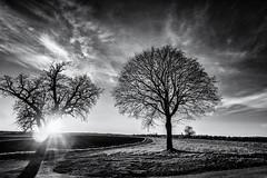Tree Explosion... (Ody on the mount) Tags: anlässe bäume em5ii fototour gegenlicht himmel landschaft mzuiko918 omd olympus pflanzen sonne sonnenstrahlen sonnenuntergang wolken bw landscape monochrome sw sunset tree