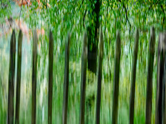 behind the fence - green (szélléva) Tags: icm intentionalcameramovement autumn fall beautiful nature colours abstract trees arborvitae