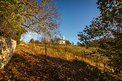 (z e d s p i c s™) Tags: szigliget balaton magyarország hungary hongarije chapel autumn fall zedspics 1811