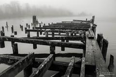 Old Wharf on the Willapa No. 11, Raymond, Washington, 2018 (Steve G. Bisig) Tags: thatpnwlife visitpnw bestofthenorthwest blackandwhite blackandwhitephotography blackandwhitephoto bnw bnwaddicted bnwcaptures bnwcreatives bnwlife bnwmagazine bnwofourworld bnwplanet bnwphotography cascadia cascadiaexplored dock explorewashington fog foggy justgoshoot landscape landscapephotography livewashington nikon nikonnofilter nikonz7 northamerica northwest outdoorphotography outdoors pacificcounty pacificnorthwest pilings pnwbnw pnwdiscovered pnwexplored pnwisbeautiful pnwisbest pnwlife pnwwonderland raymond sonorthwest thenwadventure unitedstates upperleft upperleftusa usa wanderwashington washington washingtonstate washingtonexplored water wharf z7