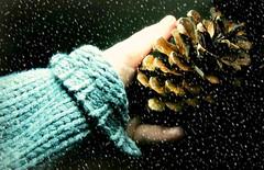Winter's Handshake (floralgal) Tags: pinecone wintershandshake warmwoolensweater femaleholdingpinecone snowinginwinter natureinwinter