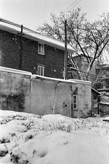 La neige brouille les pistes... (woltarise) Tags: garage jardin haie neige hiver film argentique olympus mjii ilford hp5 rosemont quartier montréal