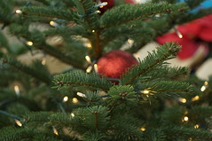DSC00604- Waltz of Christmas (oliveplum) Tags: poinsettiawishes2018 sony singapore leica60f28macro flowerdome gardensbythebay christmas tree