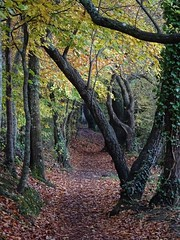 Mid autumn medley 2 (Phil Gayton) Tags: track trail path leaves foliage tree fall autumn riverside walk totnes devon uk