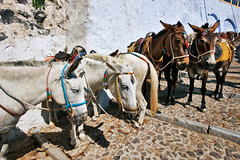 Santorini_2007_08_187 (Бесплатный фотобанк) Tags: греция греческая республика санторини остров