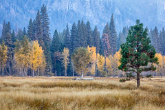 A Different Look (Kirk Lougheed) Tags: california leidigmeadow usa unitedstates yosemite yosemitenationalpark yosemitevalley autumn fall grass haze landscape meadow nationalpark outdoor park plant sky smoke tree