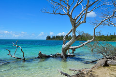 Kanumera Beach (Seventh Heaven Photography *) Tags: kanumera beach bay isle pines new caledonia pacific south islands water sea sky blue trees wood rocks driftwood