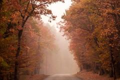 Derniers feux (Valentin le luron) Tags: nikon 800 e nature forêt arbre vaud romandie suisse automne rouge route brume yves paudex lausanne