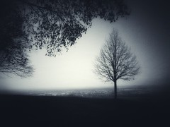 away from the city (undefinable moods) Tags: away city noise woods head realise light dark silhouette tree branches view hill mountain blackforest forest outside countryside nature naturephotography texture creepy atmosphere moody mood darkart