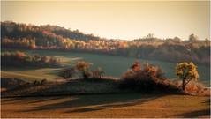 Schattenspiel (linke64) Tags: thüringen deutschland germany herbst hügel baum himmel natur landschaft licht jahreszeiten bäume berge büsche schatten wiese