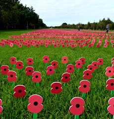 Lest we Forget. (jenichesney57) Tags: poppies nationalarboretum staffordshire memorial grass green hedges panasonic lumix£