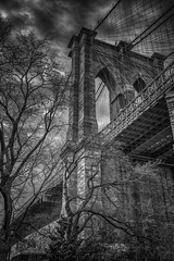 Life in Gotham (writing with light 2422 (Not Pro)) Tags: nyc newyork dumbo lukes bridge trees bw monochrome blackandwhite vertical sky sonya7 richborder brooklynbridge variotessartfe42470