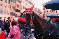 Horsie! (goodfella2459) Tags: nikonf4 afnikkor50mmf14dlens kodakektar100 35mm c41 film analog colour roma horse horsie hansomcab animal hoyaredintensifierfilter italy rome lensfiltersgroup