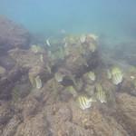 Black sand beach reef fish Hilo Big island Hawaii thumbnail