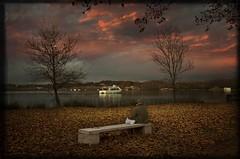 Lago de Banyoles (Carlos P R) Tags: atardecer clima hojas lago otoño paisajes plantas