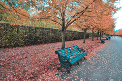 Lonely Bench (peter+clicks) Tags: londonstreets london londonparks hydepark streetphotography