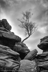 Brimham Rocks (www.chriskench.photography) Tags: xt2 england travel kenchie wwwchriskenchphotography fujifilm yorkshire dales monochrome bw blackandwhite yorkshiredales rocks tree cumbria