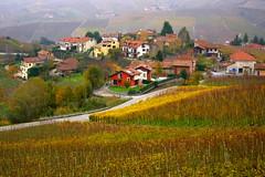 Barolo (annalisabianchetti) Tags: piemonte barolo italy vigneti vineyards countryside houses case village villaggio travel paesaggio landscape beautiful rural autumn autunno