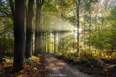 Path to the light (rudyvanmiltenburg) Tags: veluwe veluwezoom gelderland autumn fujifilmxt20 landscapes netherlands