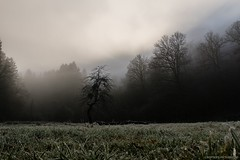 F u n e r a l   P o r t r a i t   [Opeth] (Crofter's) Tags: winter winterfell morning earlythemorning forest forestofdecember pines pine trees tree frozentrees moss forestmoss quiet quietplace silentforest magicalforest magicaltrees pinetree walkingthroughtheforest walk 2018 winter2018 sony sonyalpha sonyalpha77ii sony77ii sony1650 sony1650mm crofterspictures hobbit gameofthrones intothewild coldweather coldwater rocks rock white deepwhite path shadows throughtheforest skyrim elderofscroll field fieldofdesolation silenthill silentfield silentvalley fog lostinthefog herghostinthefog foggytimes foggy sun sunrays humidity smog shadowoftheday dark darkness mistedghosts misted ghosts mesmerizingforest mesmerizing frost nofilters sonya77ii wardruna ensiferum vikings opeth wildlands