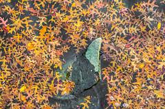 Shark Fin Autumn. (Omygodtom) Tags: vertical leaves rock shark fin nature abstract art natural style season senery scene nikon usgs