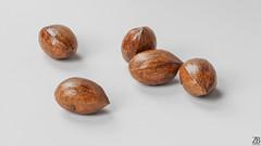 Pecan 3D model (ZB-Vision) Tags: pecan nut 3d model pekan pikan oreh walnut pacana pecannoot peca pecannuss pekannöt smooth brown small oval american carya shell thin betel brazil hickory oblong husk seed wood