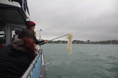 Plastic pollution retrieval 2 (MarBio Abbie) Tags: plastic microplastic trawl marine biology marinebiology stem science boat sea estuary plankton fieldwork pollution beachcleanproject